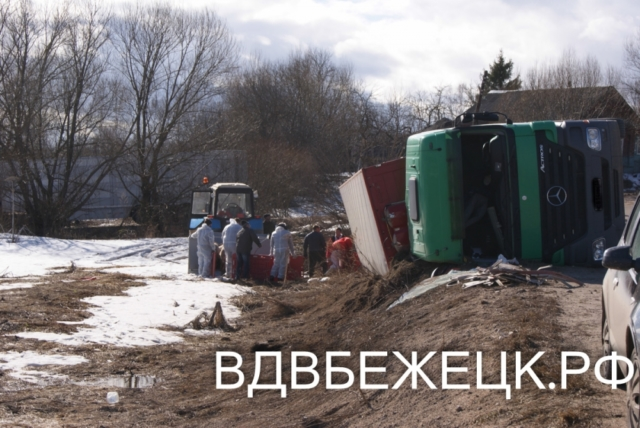 На трассе Бежецк – Максатиха перевернулась фура со свиньями