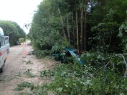В Тверской области дерево рухнуло на машину, в ДТП погиб молодой пассажир иномарки